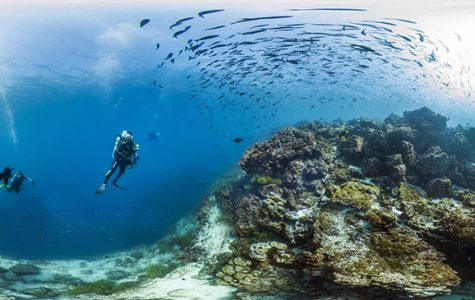 Helping a Great Reef at Risk