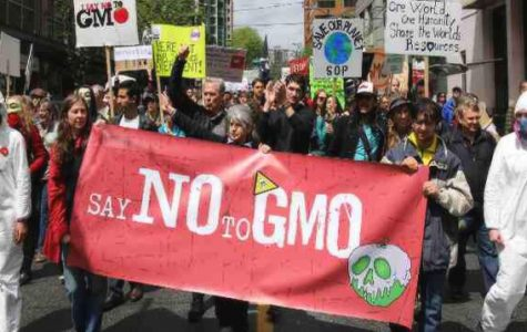 The Ongoing GMO Debate