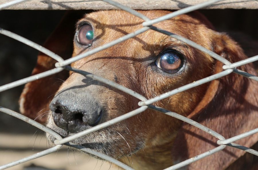 Puppy Mills: Why Are They Problematic?